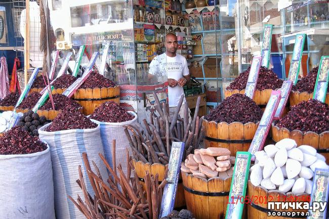 фото 44: Египет. Знакомство.