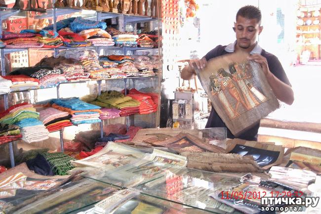 фото 48: Египет. Знакомство.