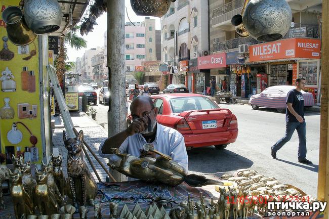 фото 46: Египет. Знакомство.