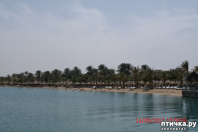 фото 18: Египет. Знакомство.