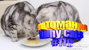 фото: Смешные коты | Приколы с котами | Видео про котов | Котомания #110