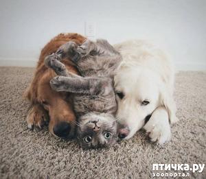 фото: О котейках.