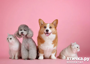 фото: Вредна ли собакам соль?
