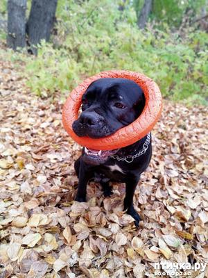 фото: Помогите пожалуйста обратно вернуть воспитанную собаку!