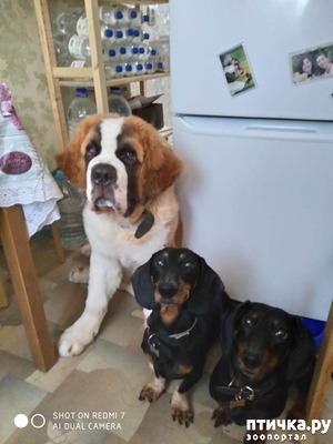 фото: Как ужиться с бесповодочными собаками