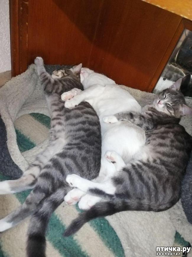 фото 24: Мои хвостатые сплюшки.