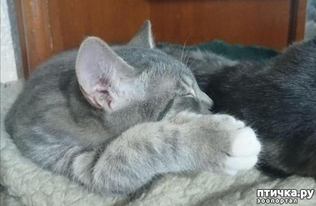 фото 23: Мои хвостатые сплюшки.