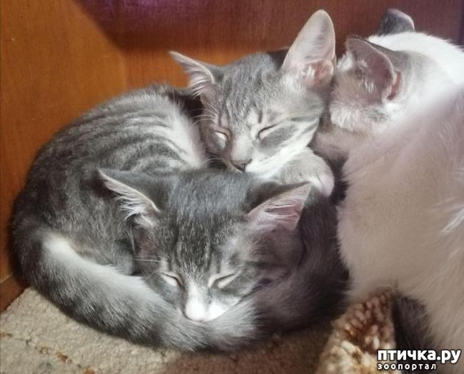 фото 21: Мои хвостатые сплюшки.