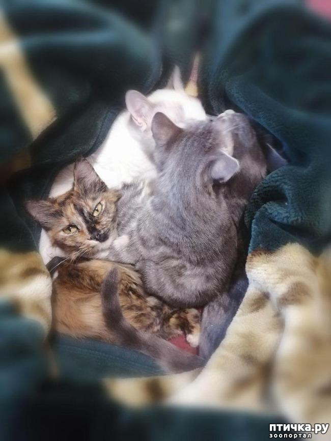 фото 18: Мои хвостатые сплюшки.