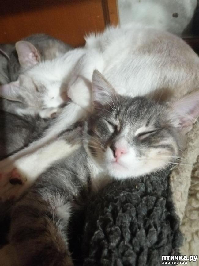 фото 15: Мои хвостатые сплюшки.