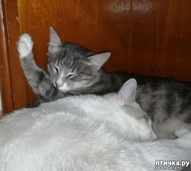 фото 11: Мои хвостатые сплюшки.