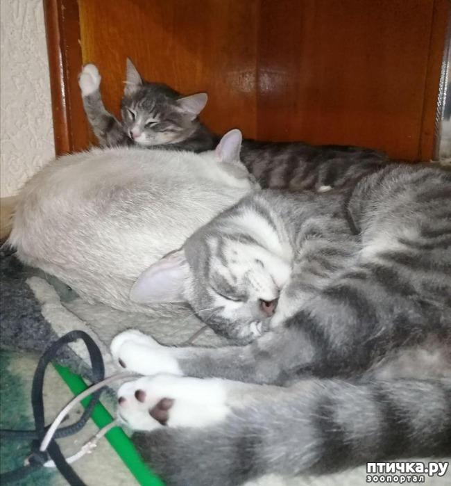 фото 12: Мои хвостатые сплюшки.