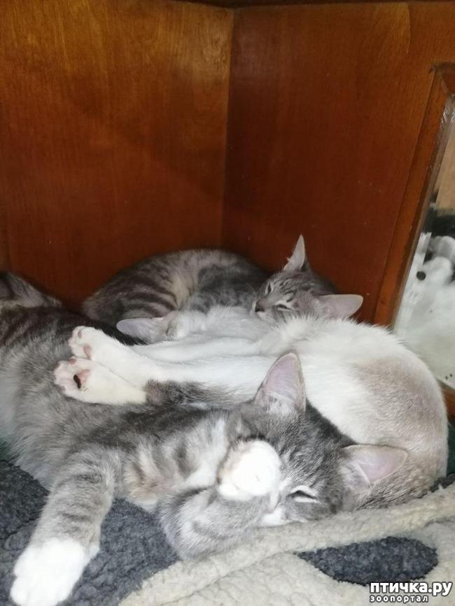 фото 9: Мои хвостатые сплюшки.