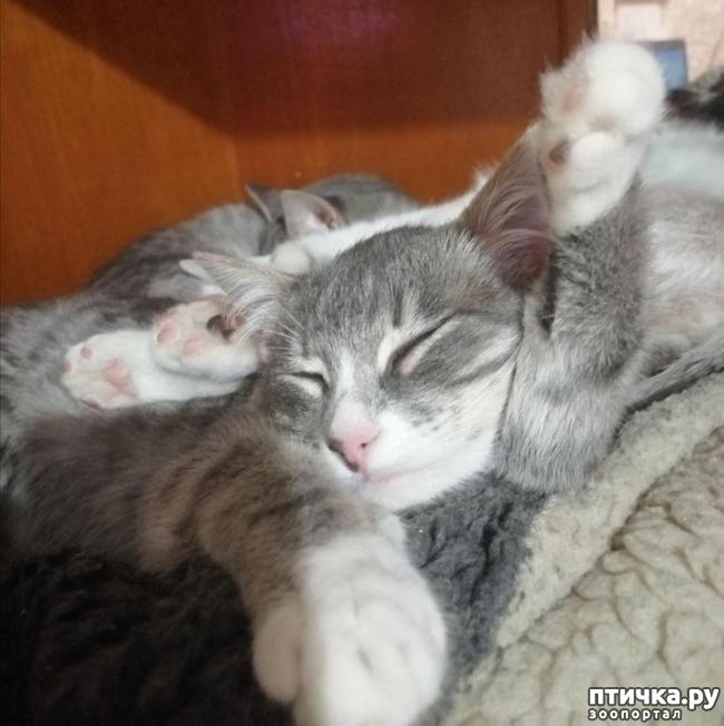 фото 8: Мои хвостатые сплюшки.