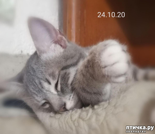 фото 6: Мои хвостатые сплюшки.