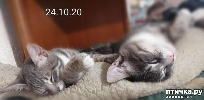 фото 4: Мои хвостатые сплюшки.