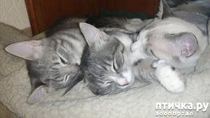 фото: Мои хвостатые сплюшки.