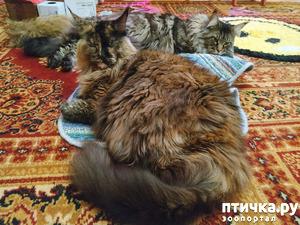фото: Кошки