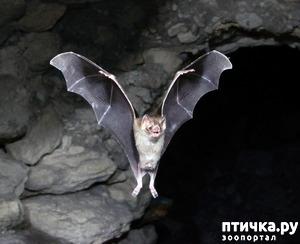фото: И ещё о вампирах