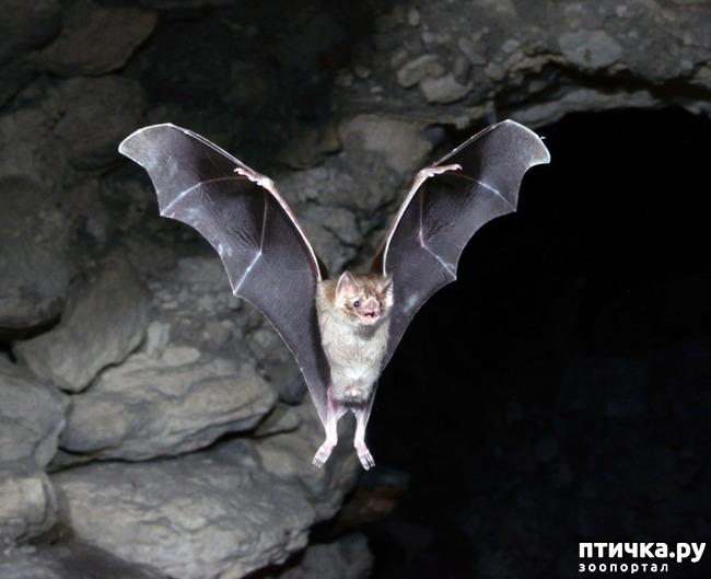 фото 1: И ещё о вампирах