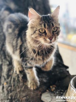 фото: Только кошки