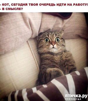 фото: Котоматрица! Котоюмор