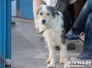 фото: Породы собак для города