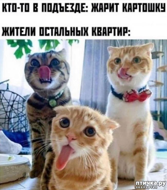 фото 1: Смешные кошки