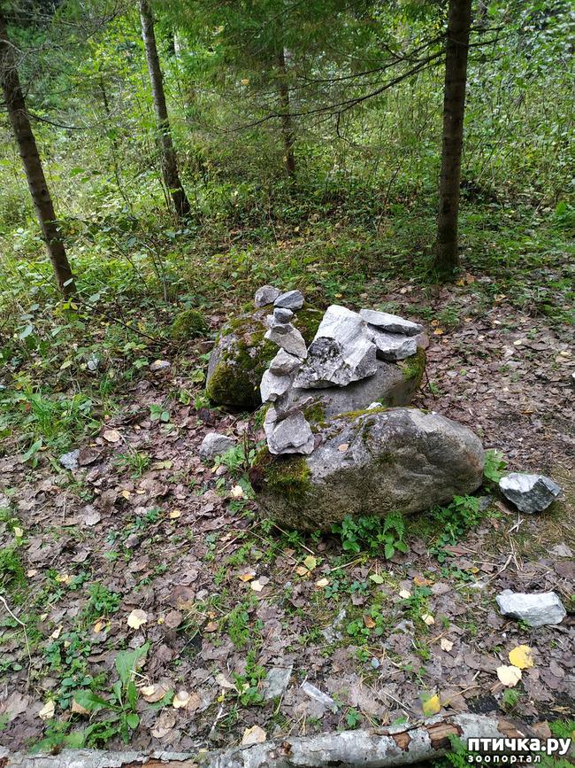 фото 25: Рускеала - горный парк
