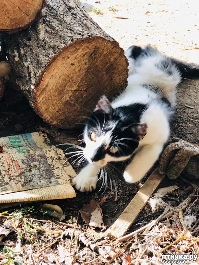 фото 6: Новости от кота Марселя
