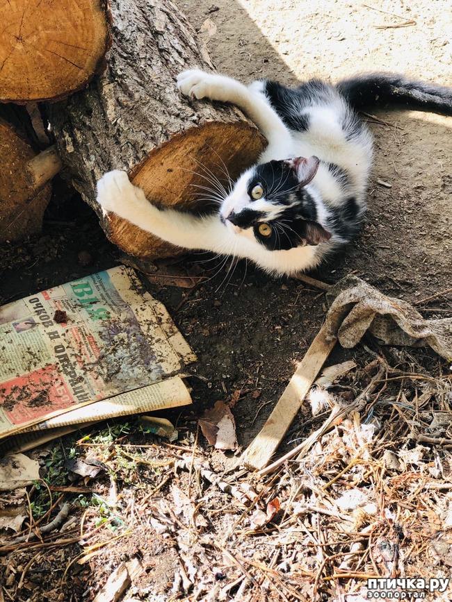 фото 5: Новости от кота Марселя
