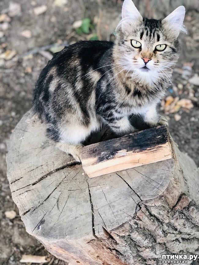 фото 7: Новости от кота Марселя