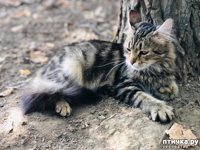 фото 8: Новости от кота Марселя