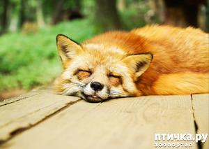фото: Видят ли сны наши кошки и собаки?