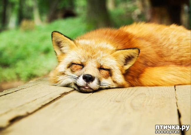 фото 1: Видят ли сны наши кошки и собаки?
