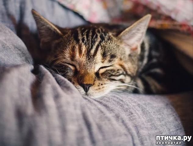 фото 2: Видят ли сны наши кошки и собаки?