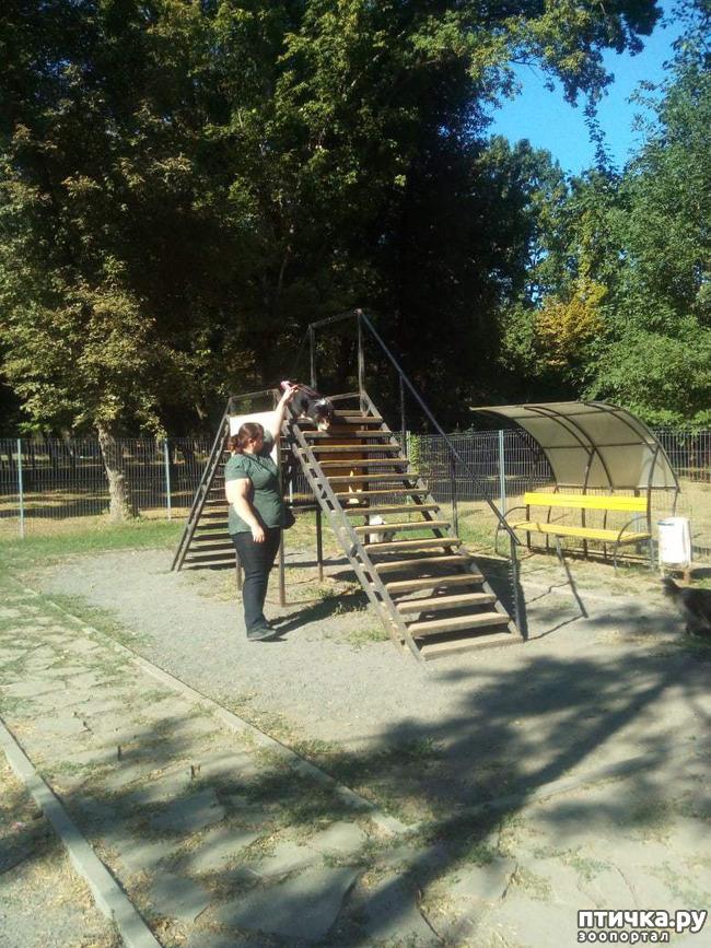 фото 9: Встреча колли и шелти