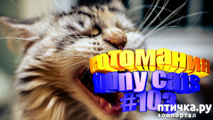 фото: Смешные коты | Приколы с котами | Видео про котов | Котомания #103