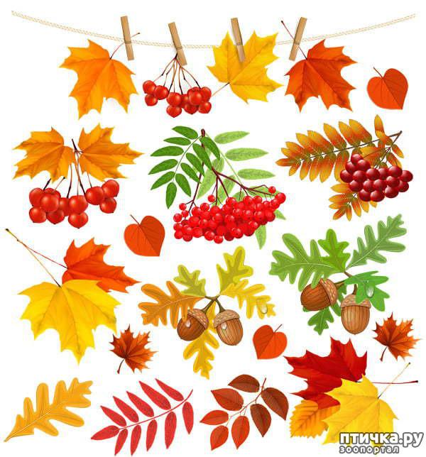 фото 1: Здравствуй, осень!