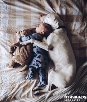 фото: Собаки и дети