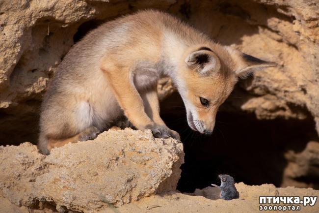 фото 24: Премия комедийной фотографии дикой природы - 2020
