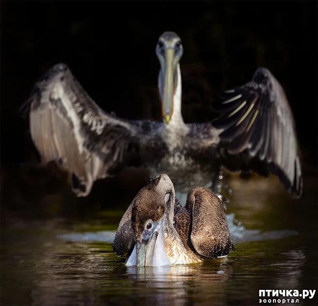 фото 20: Премия комедийной фотографии дикой природы - 2020