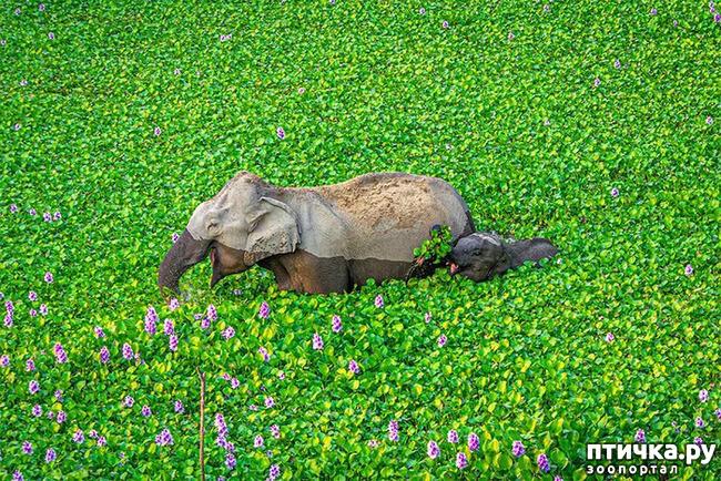 фото 18: Премия комедийной фотографии дикой природы - 2020