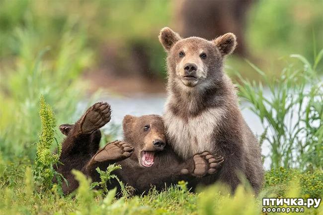 фото 17: Премия комедийной фотографии дикой природы - 2020
