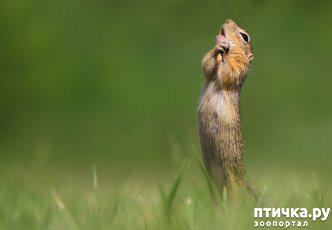 фото 2: Премия комедийной фотографии дикой природы - 2020