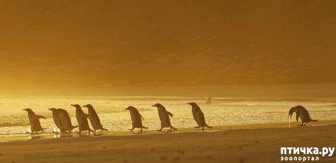 фото 3: Премия комедийной фотографии дикой природы - 2020