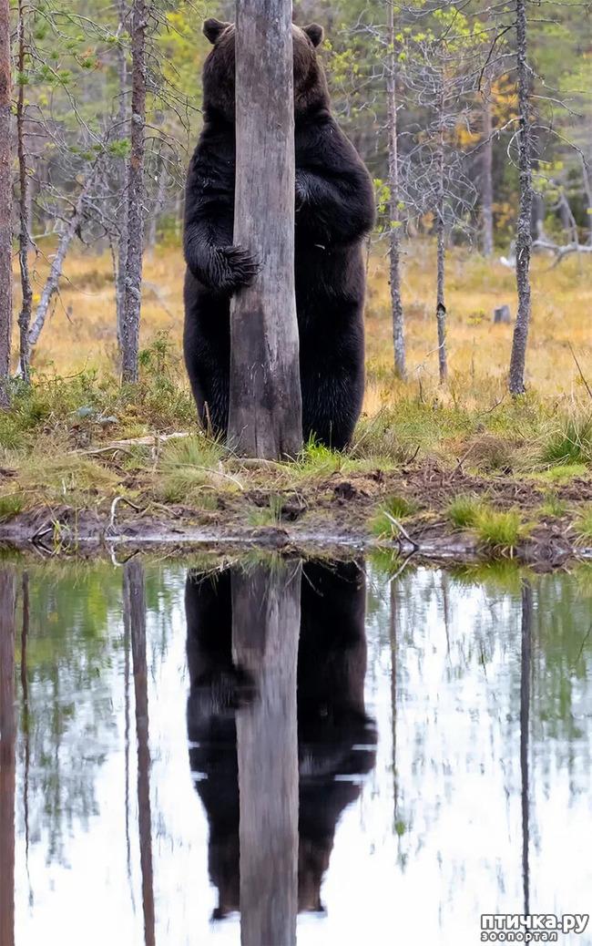 фото 16: Премия комедийной фотографии дикой природы - 2020