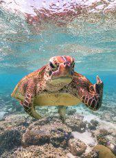 фото 19: Премия комедийной фотографии дикой природы - 2020
