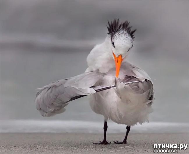 фото 9: Премия комедийной фотографии дикой природы - 2020