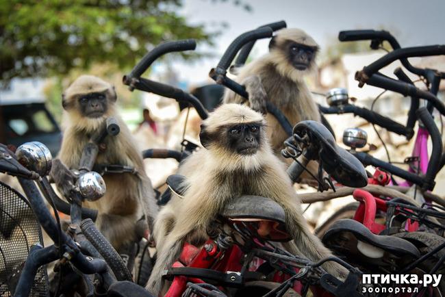 фото 22: Премия комедийной фотографии дикой природы - 2020